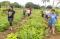 Fanguna family walking in their fields