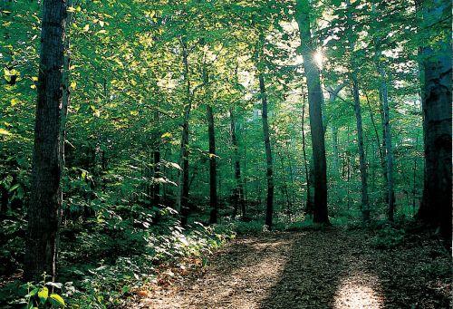 New York. Ontario Co. Sacred Grove.