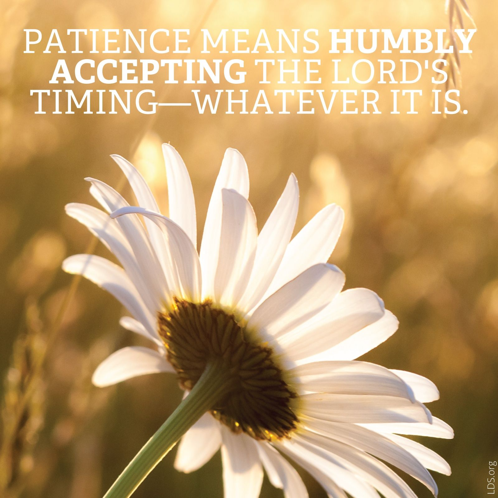"""""""Patience means humbly accepting the Lord's timing—whatever it is.""""—Sarah Jenkins, """"Trust, Patience, and Endurance: My Lessons from Infertility"""""""