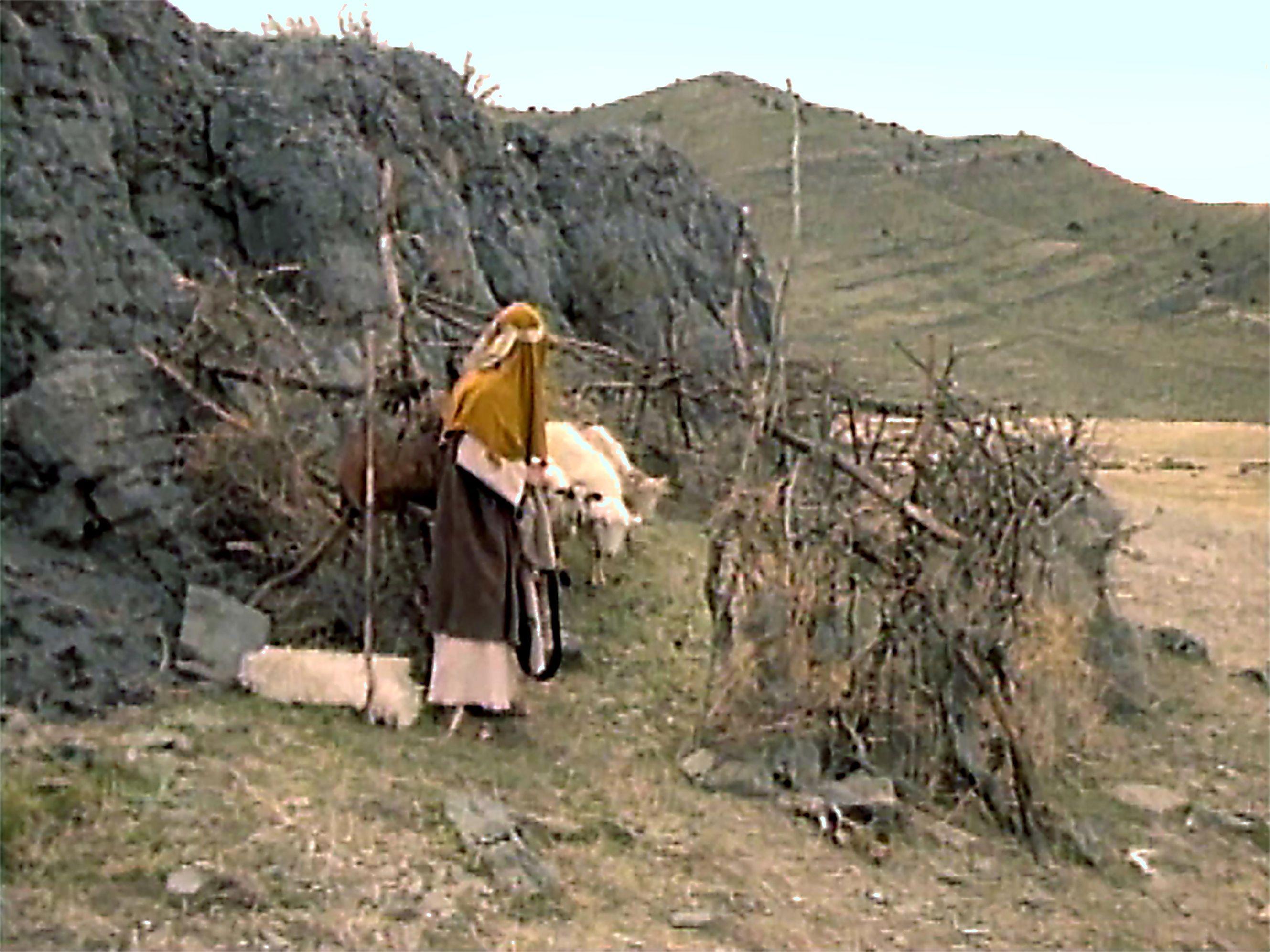 A shepherd leading his sheep.