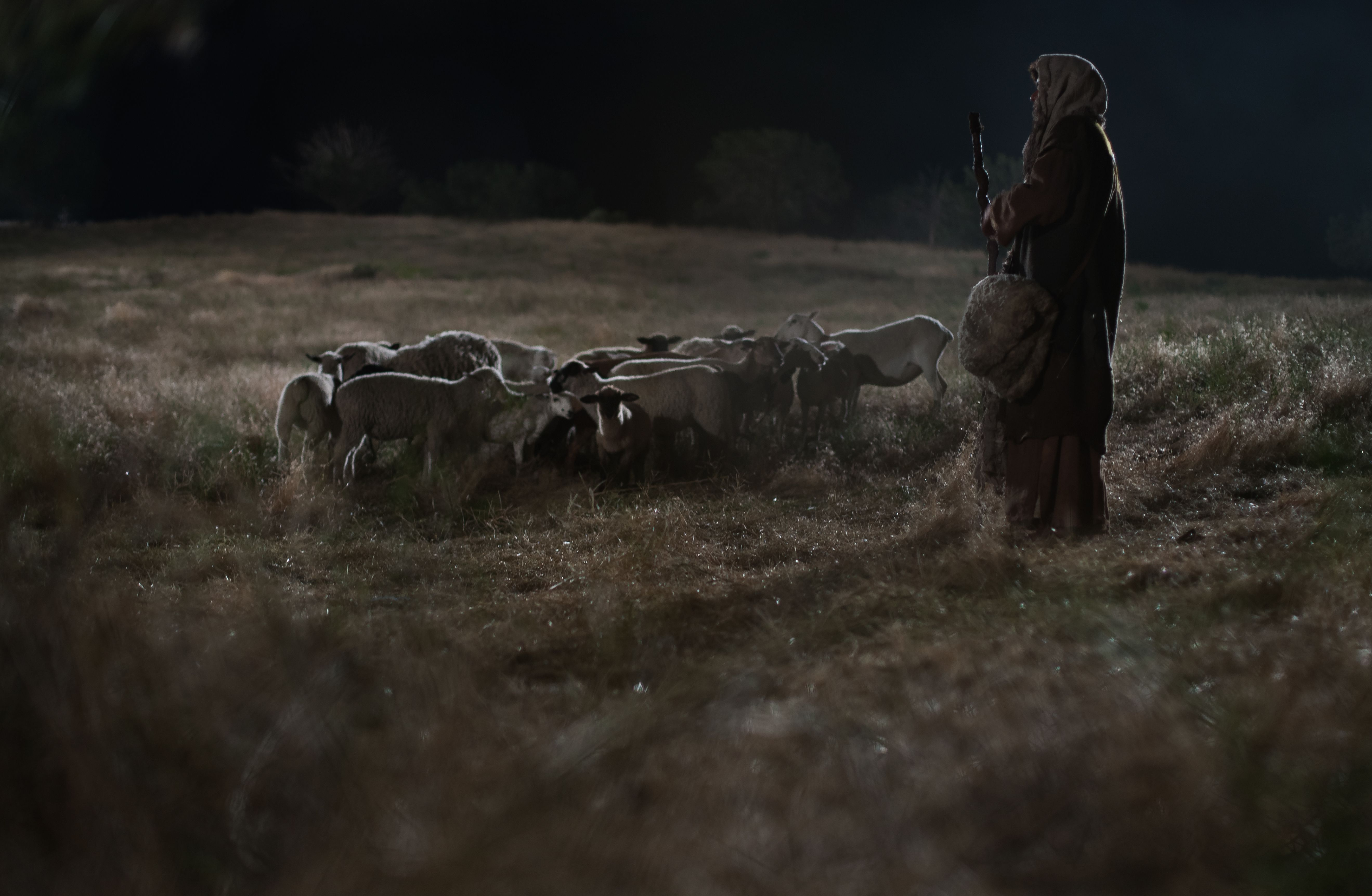 A shepherd stands alone in a field at night with his sheep.