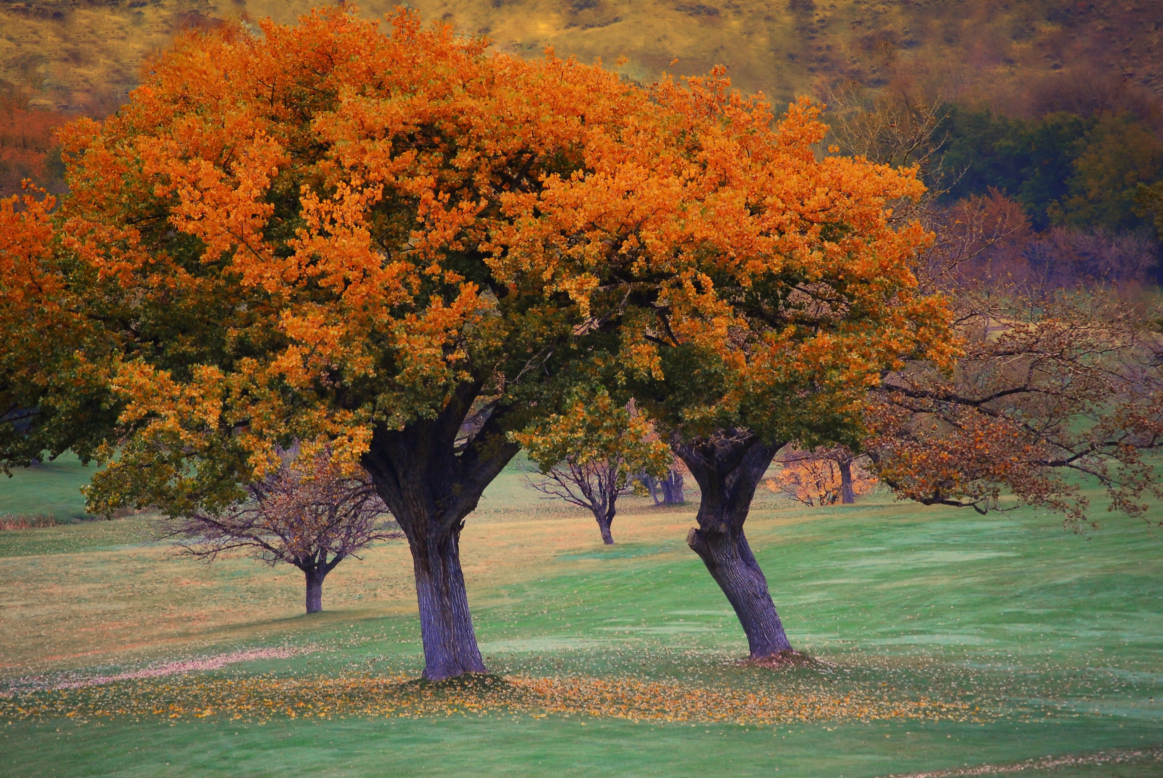 Trees with changing leaves in the autumn.