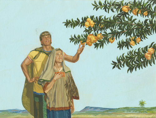man and wife picking fruit