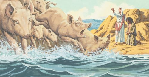 pigs running into sea