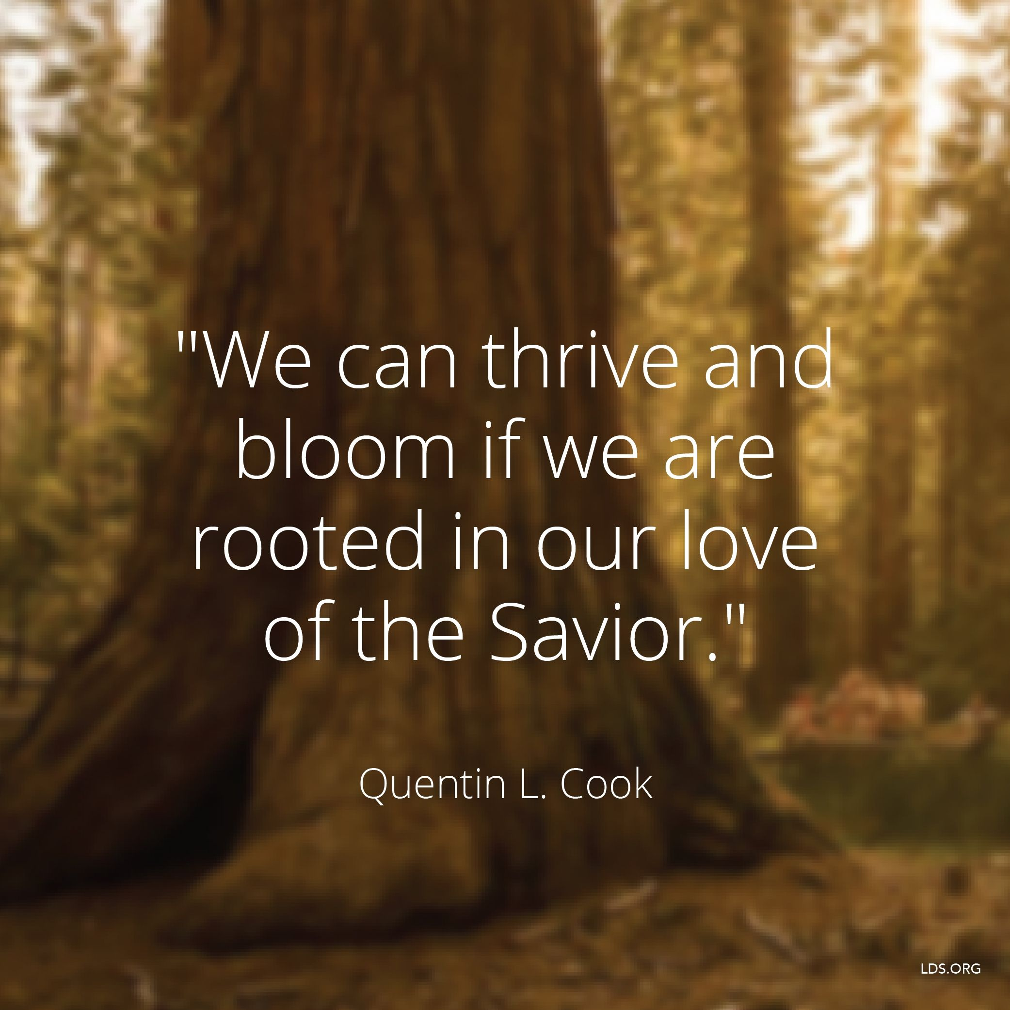 """""""We can thrive and bloom if we are rooted in our love of the Savior.""""—Elder Quentin L. Cook, """"The Lord Is My Light"""""""