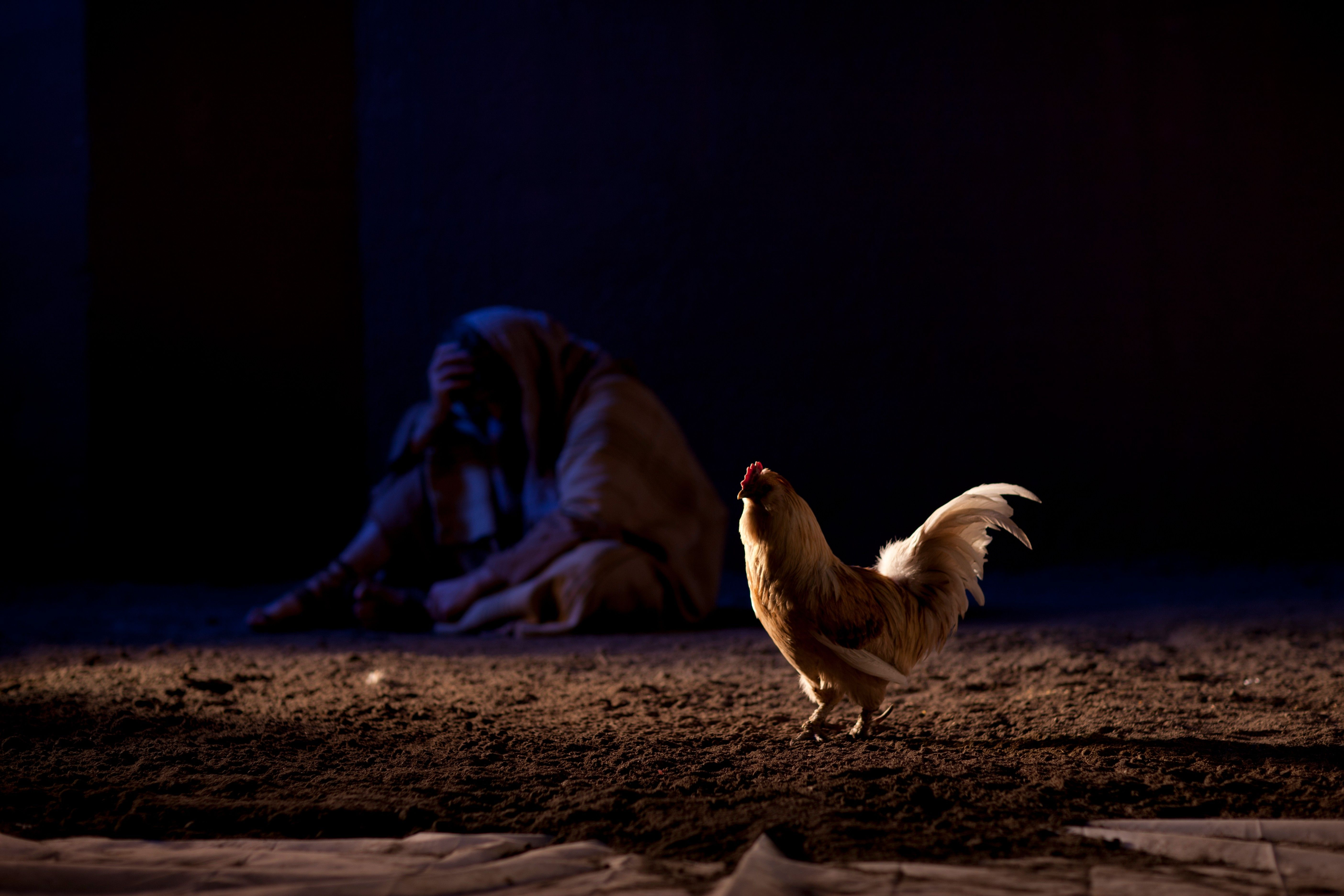 Peter in despair, sitting near a rooster after having denied Christ.