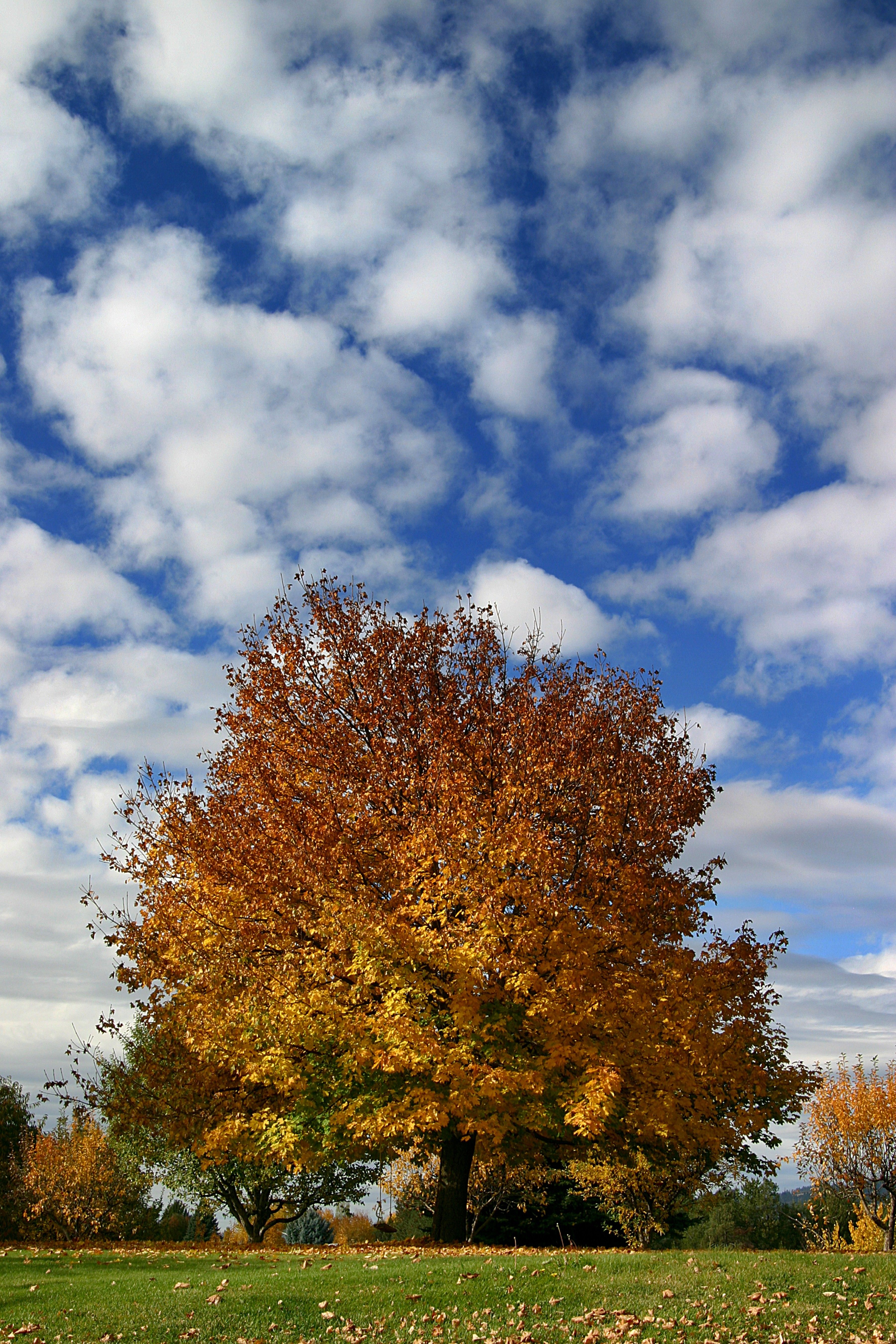 Trees with changing leaves on a sunny day.