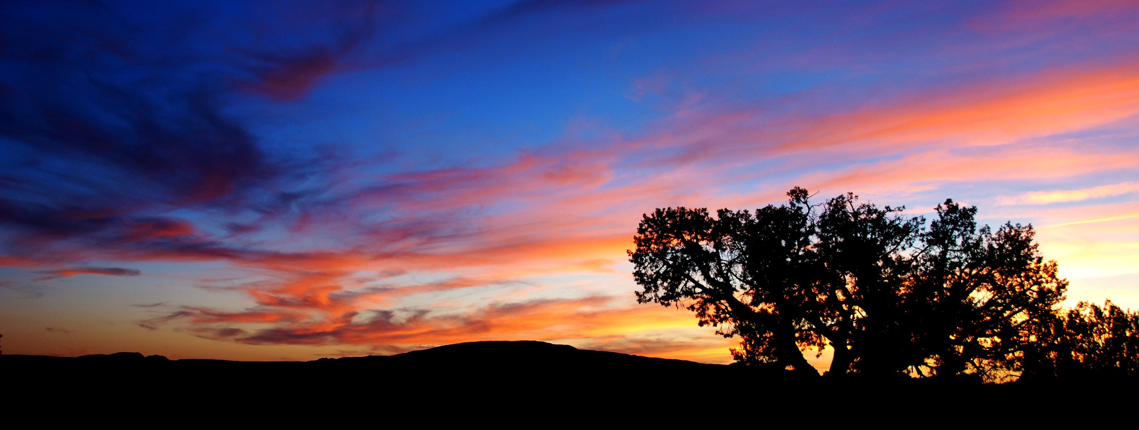 A large tree is silhouetted by a sunset.
