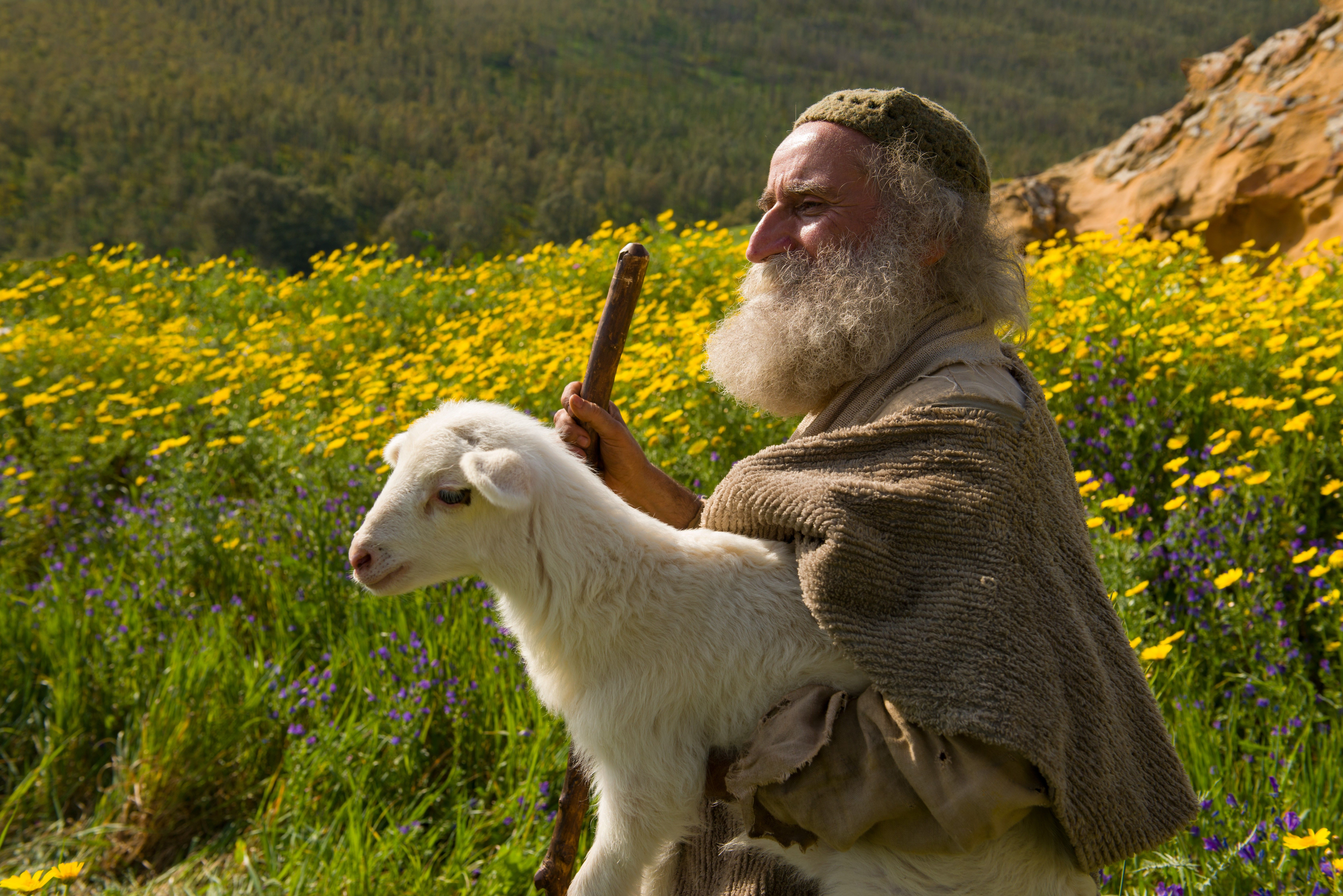 The shepherd goes and finds his lost sheep.