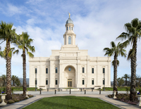 Palm trees lead to the entrance of the Concepción Chile Temple.