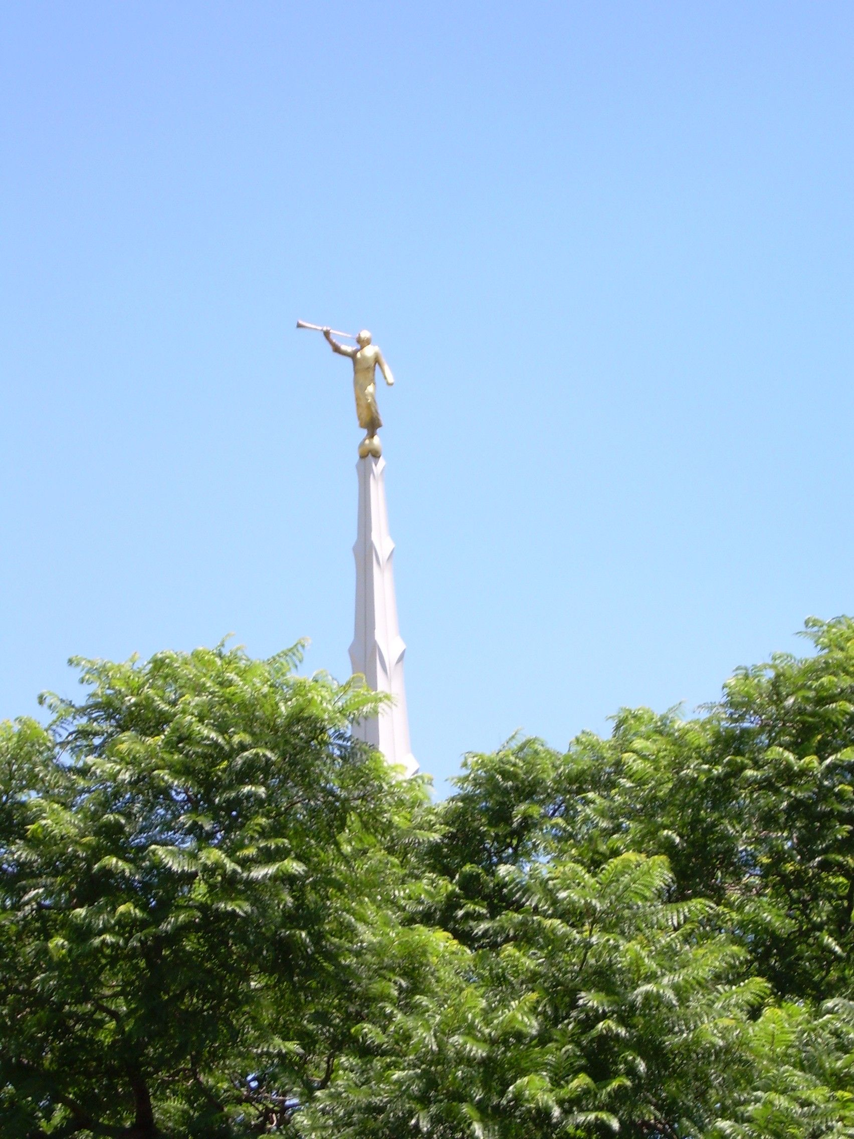 The Johannesburg South Africa Temple spire, including trees.