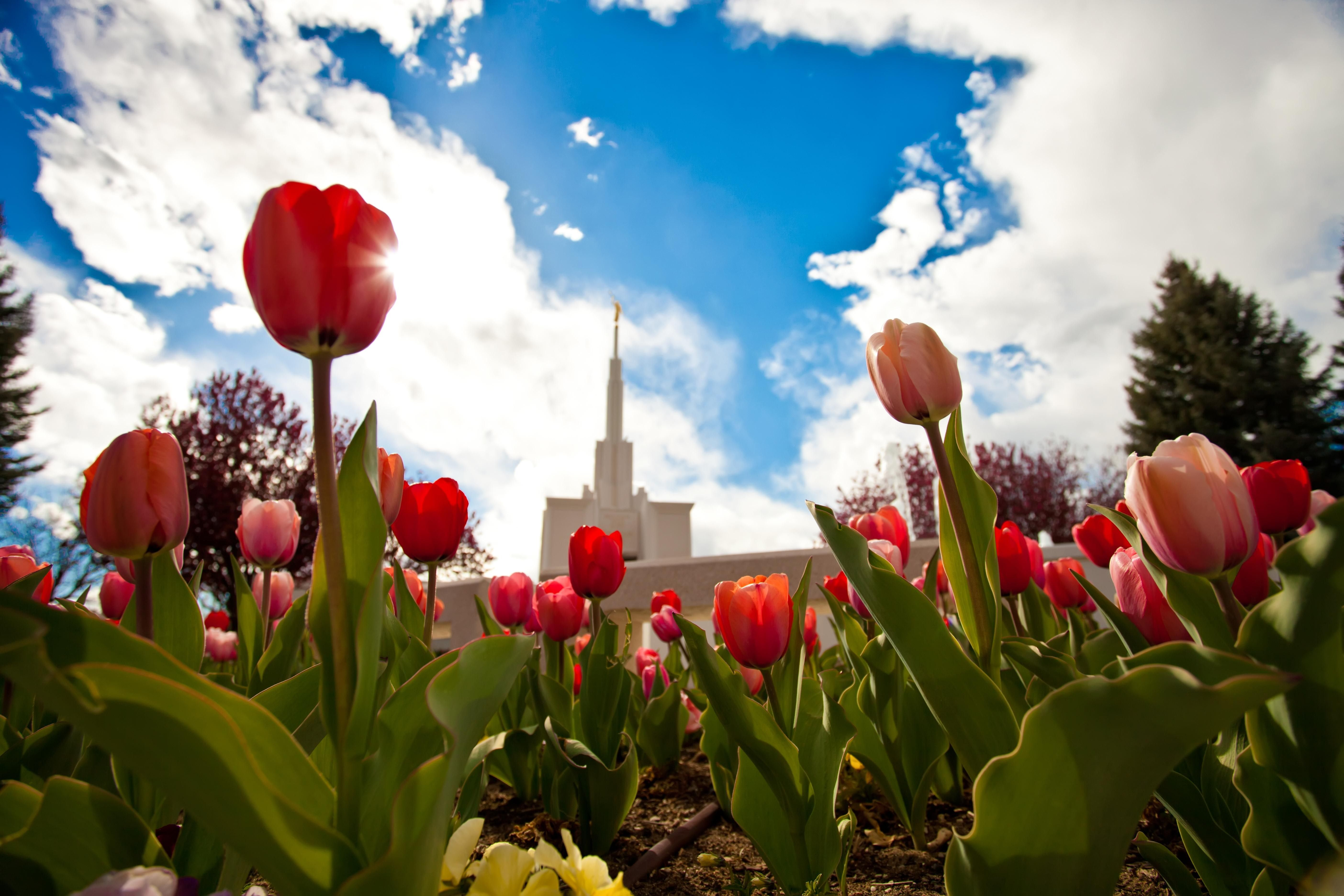 A view of the Denver Colorado Temple from the temple grounds.