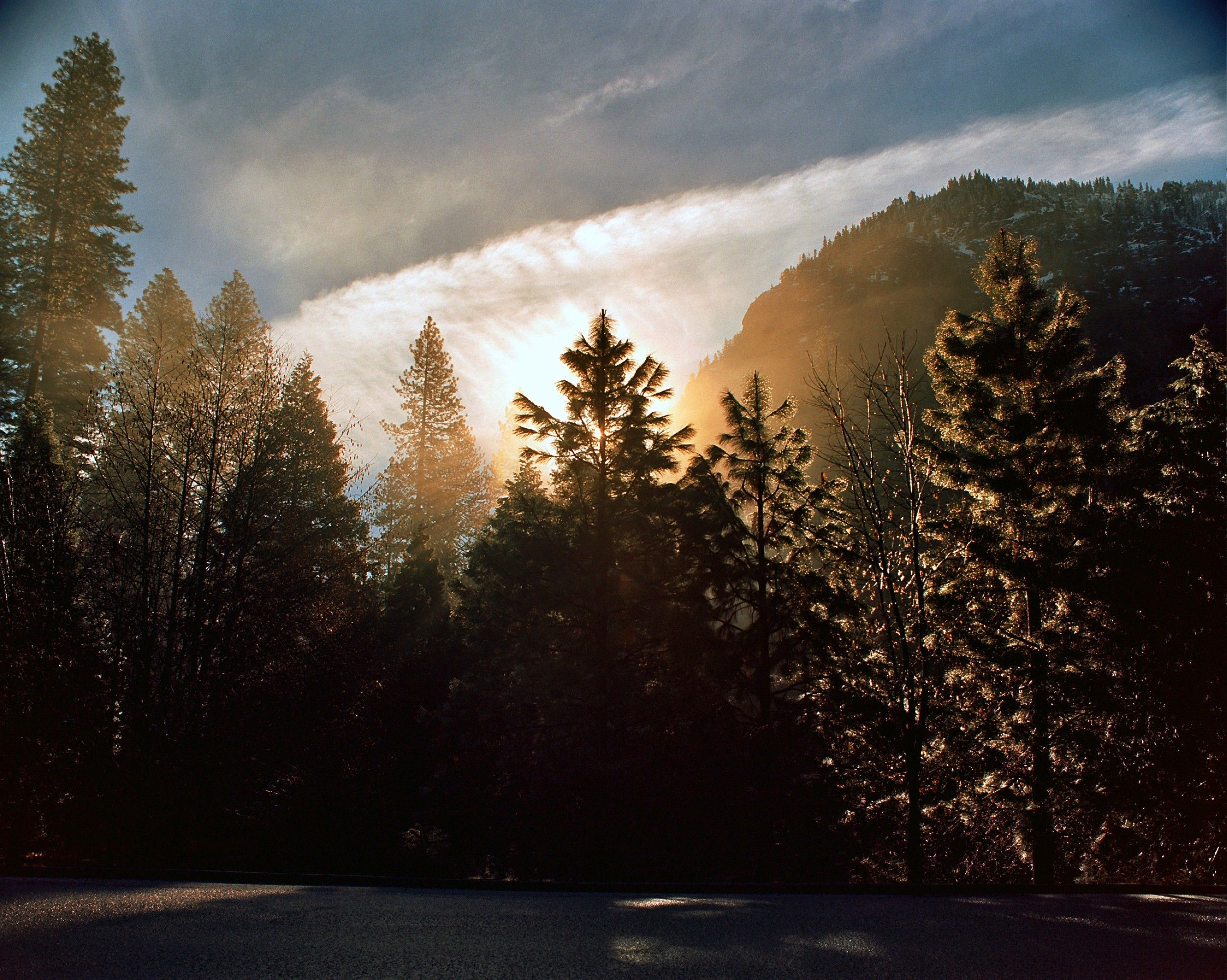 The sun peeks out from behind large pine trees at Yosemite.