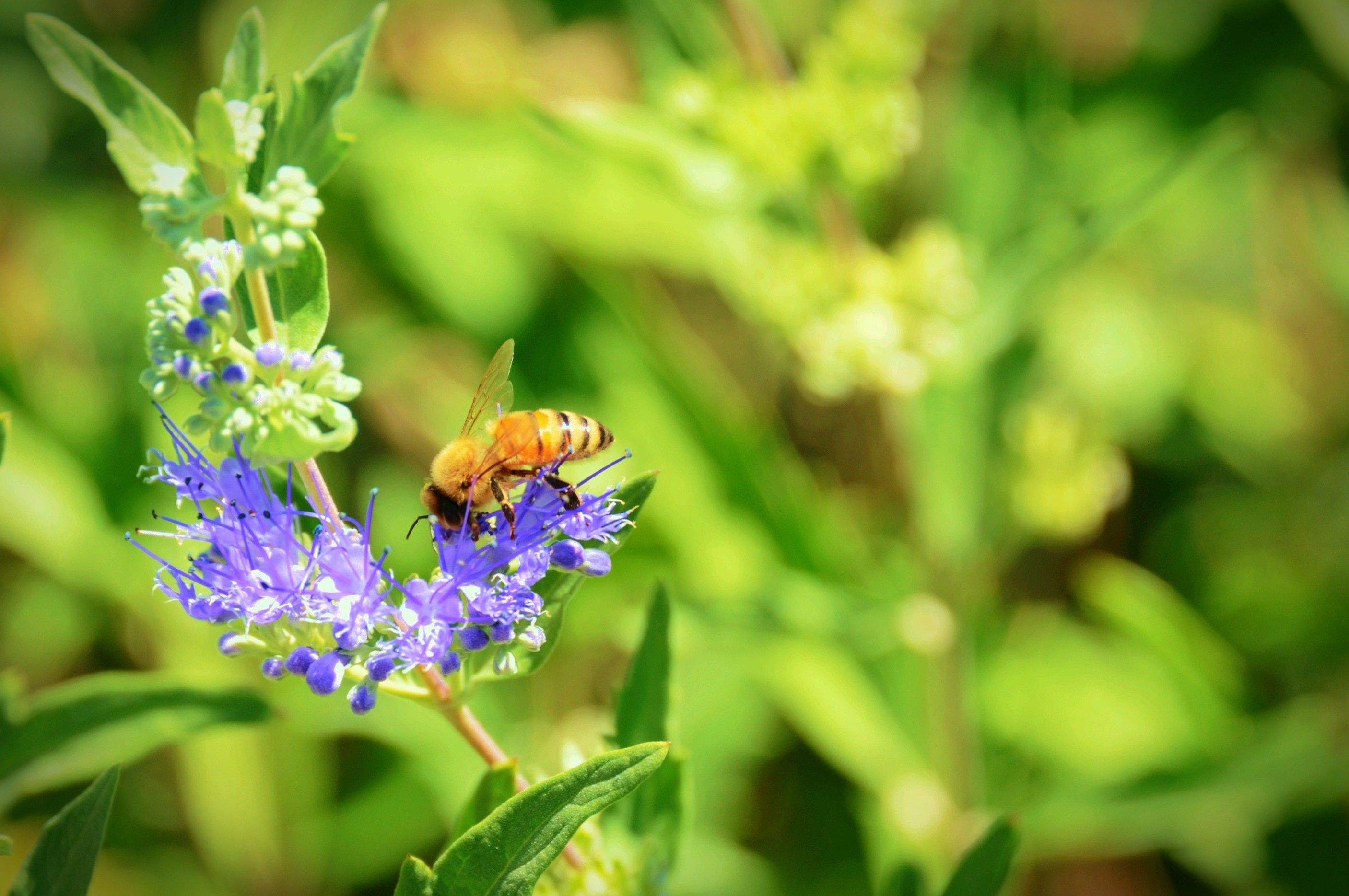 A bee lands on a flower.