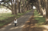 woman standing on tree-lined road