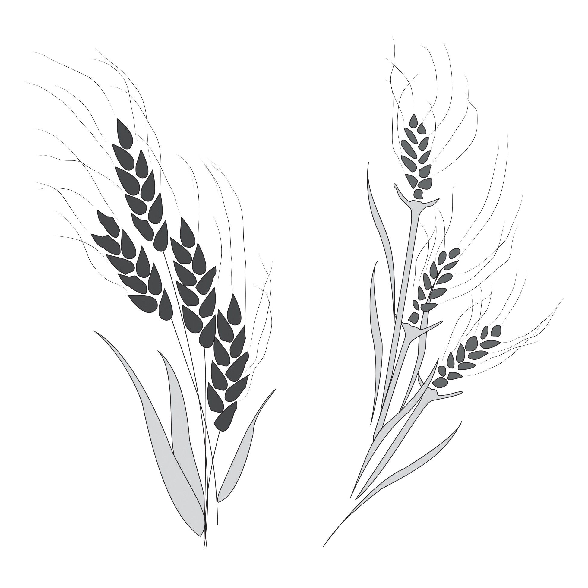 A black-and-white illustration of wheat and a tare.