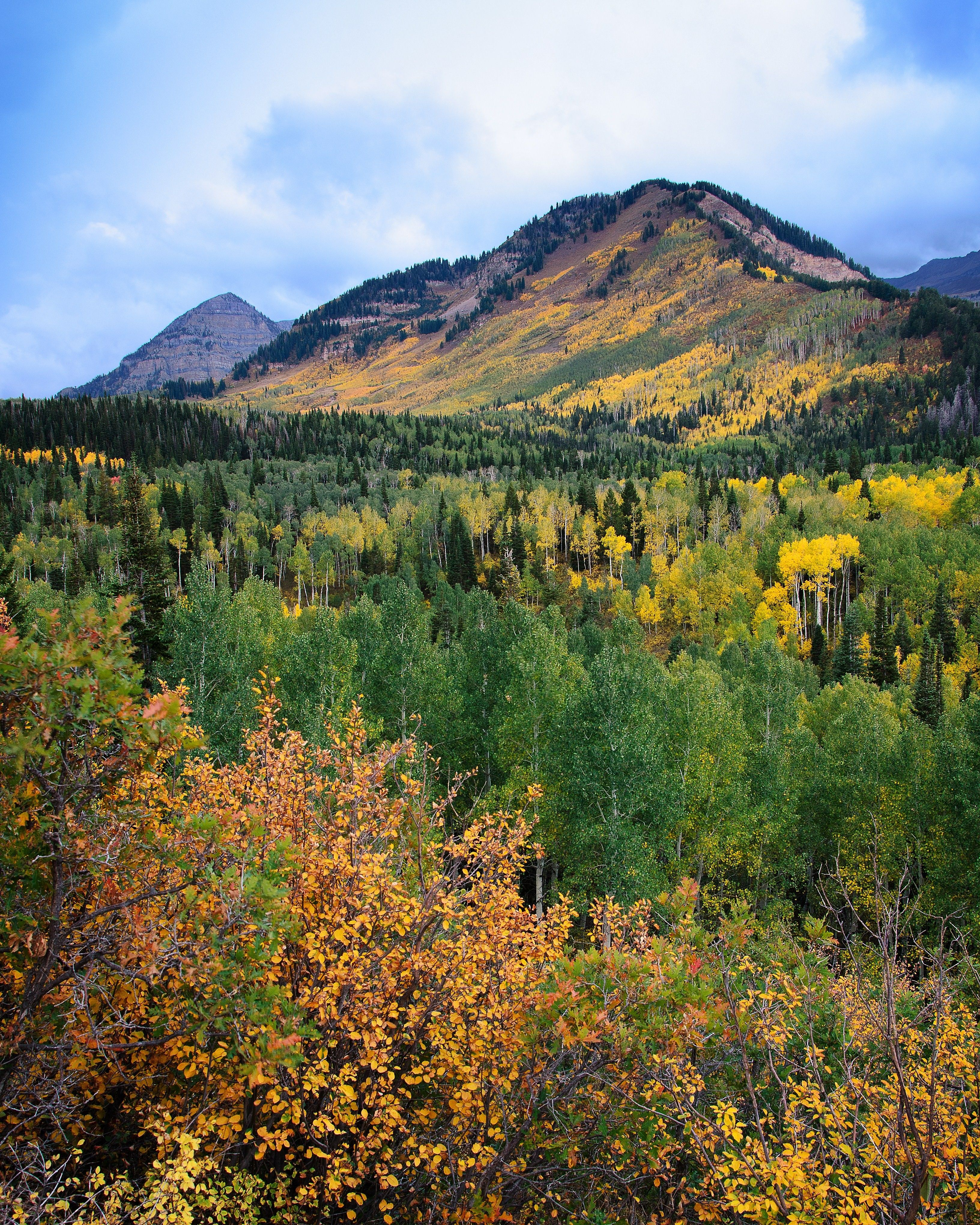A mountain scene with yellow trees scattered throughout the forest.
