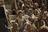 Jan. 14—20: Luke 2; Matthew 2
