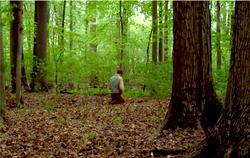 Joseph Smith kneeling in Sacred Grove