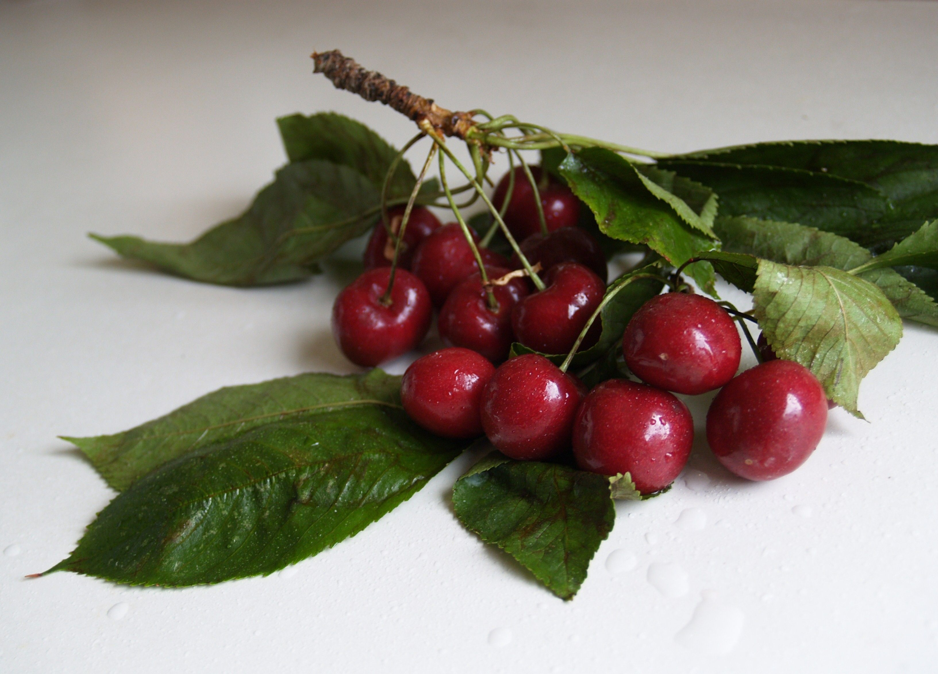 Cherries on a branch.