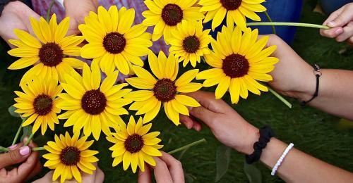 Utah: Sunflowers