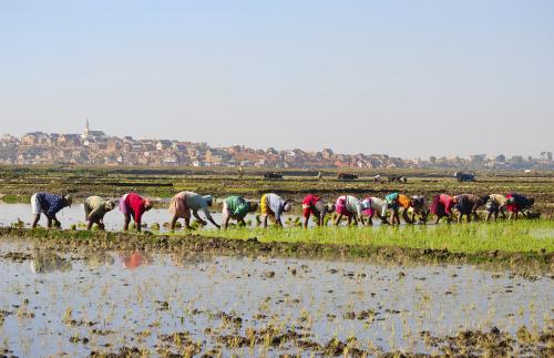 Madagascar: Rice Planting