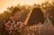 Women sitting outside during sunset.