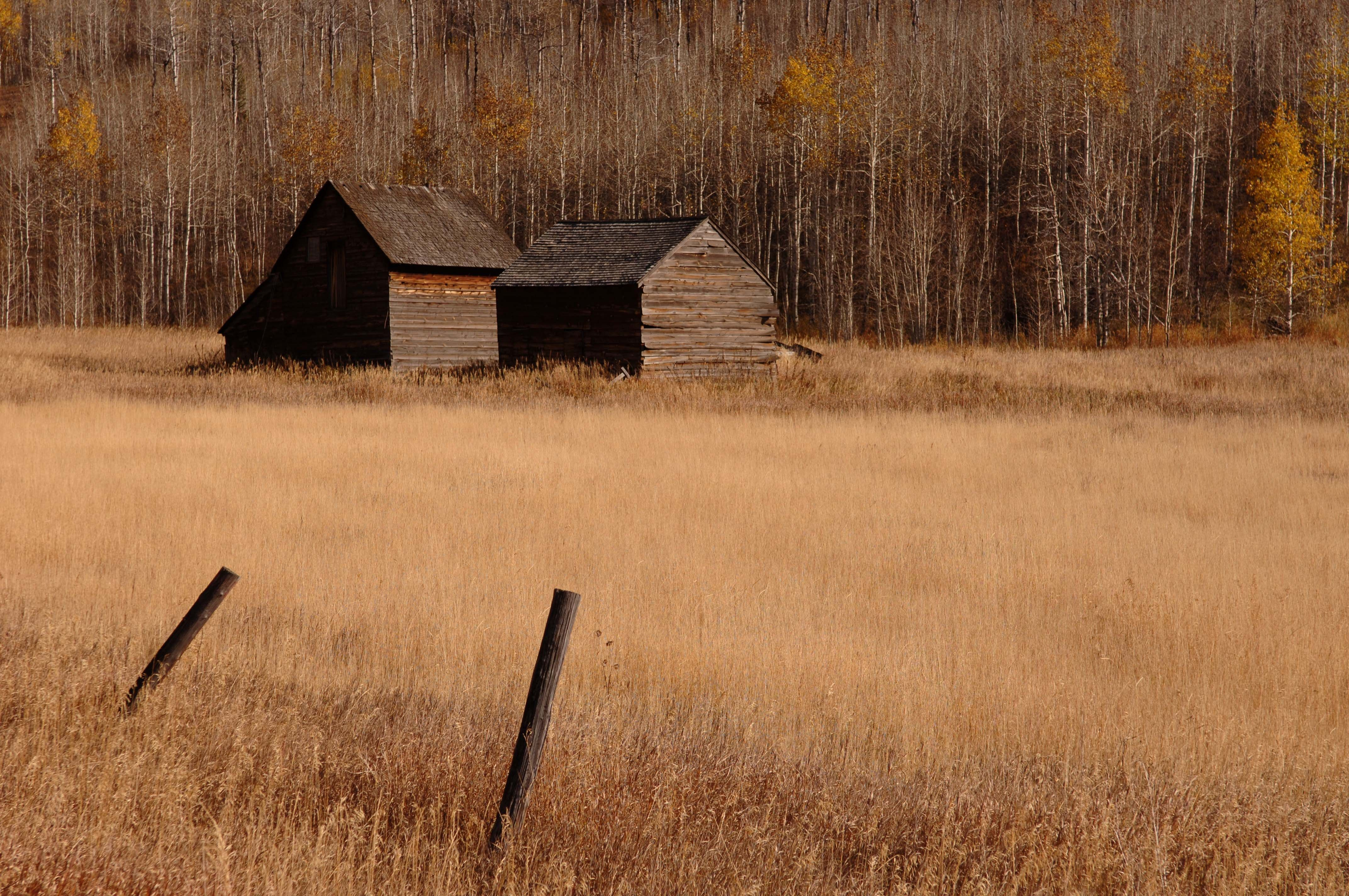 Two cabins in a field, with trees with sparse yellow leaves in the background and two fence posts in the foreground.