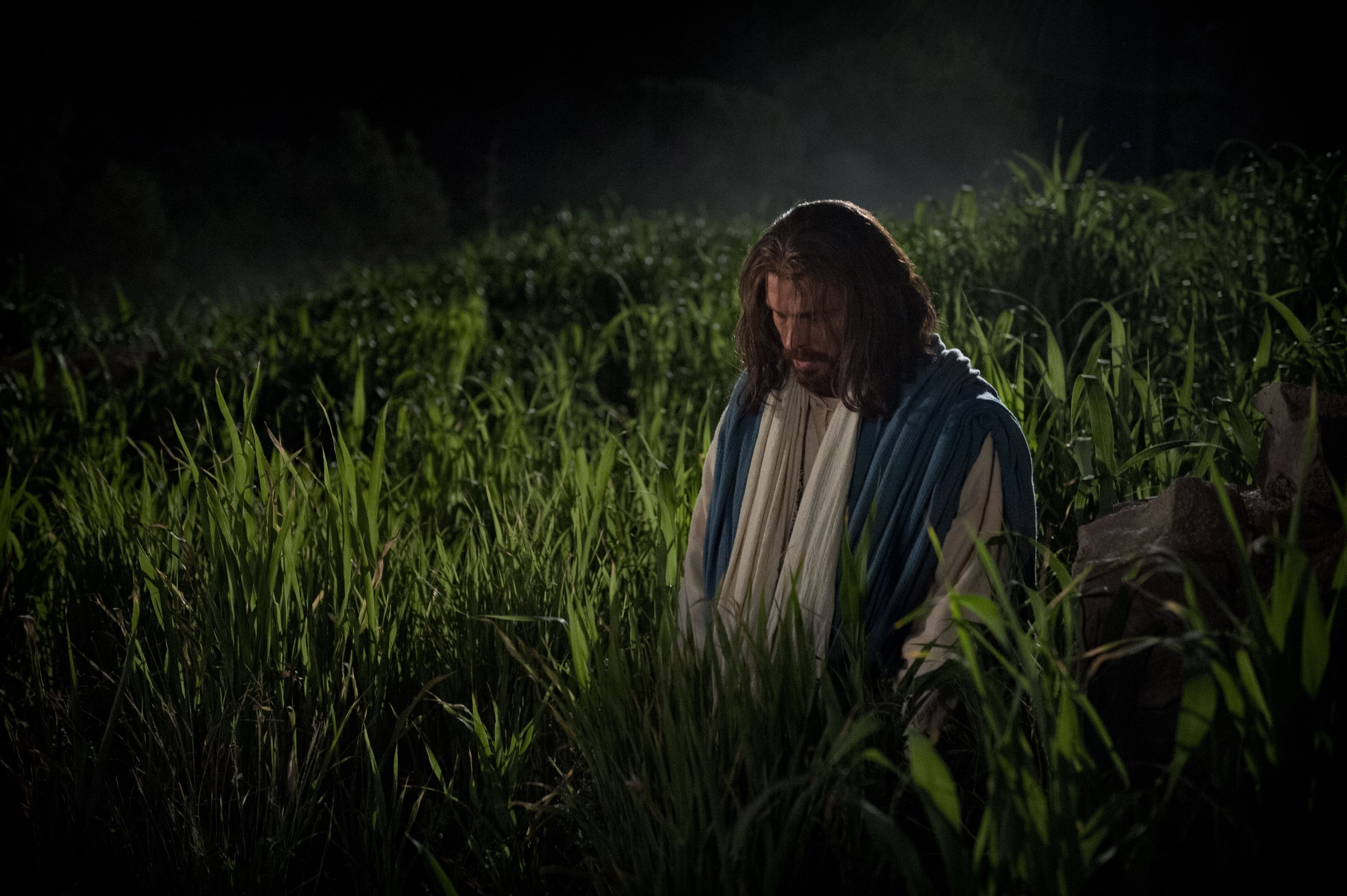 Jesus kneels and prays to God in the Garden of Gethsemane.