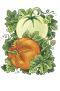pumpkin and melon