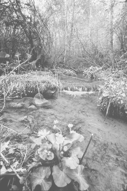 Cayuga Brook