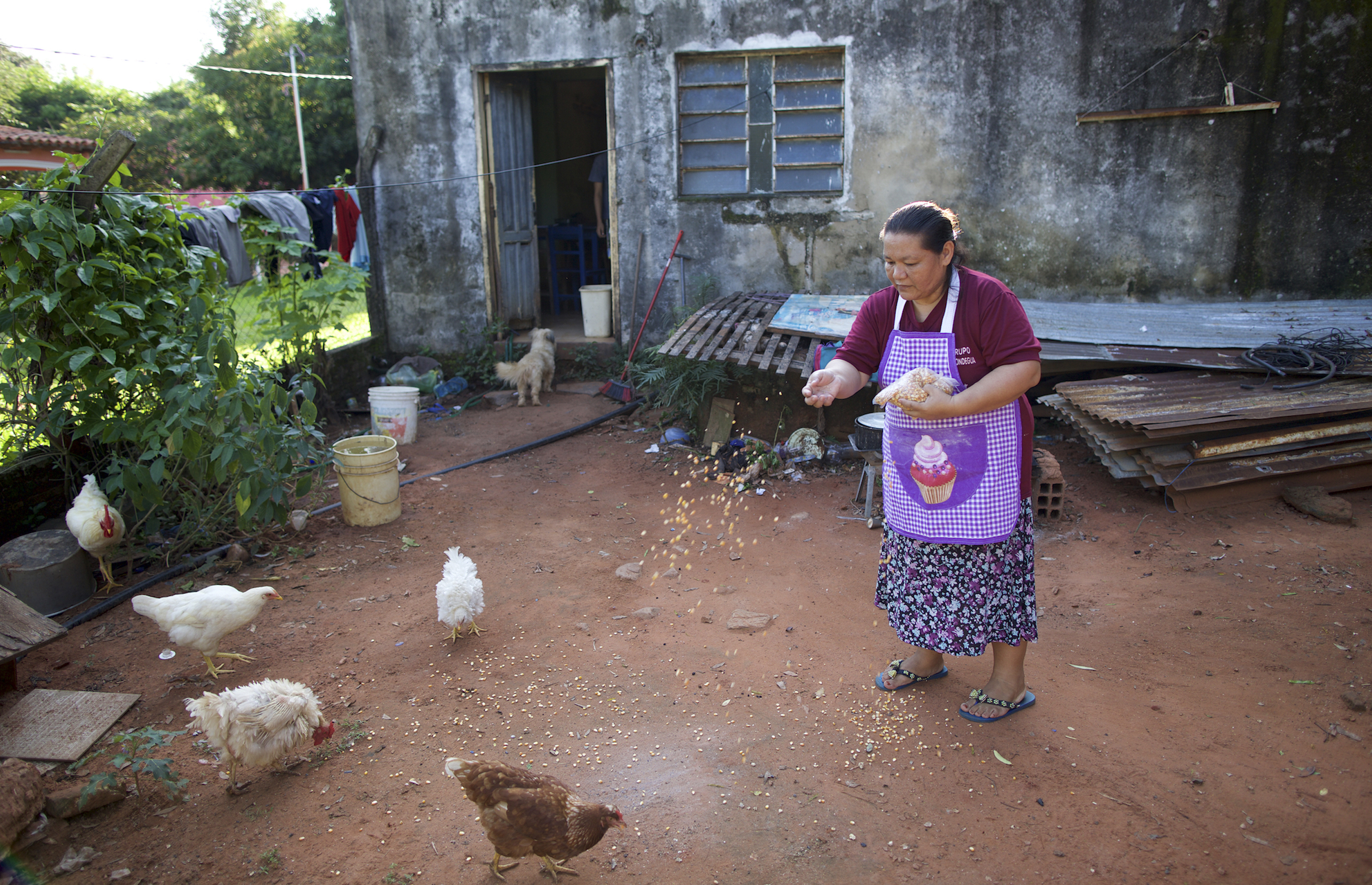 Feeding the chickens is part of running Adriana's small business. Their eggs provide an essential ingredient in her bread.