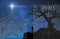 man by a tree looking at night sky