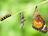 Raupe, Puppe und Schmetterling