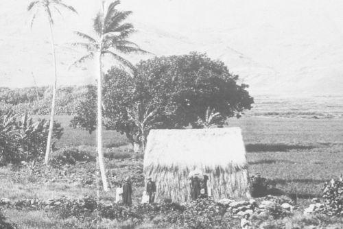 Hawaiian grass hut