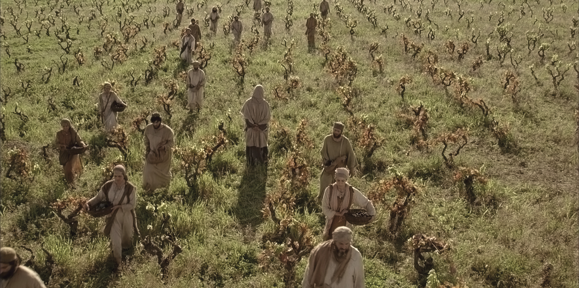 People labor in the vineyard.