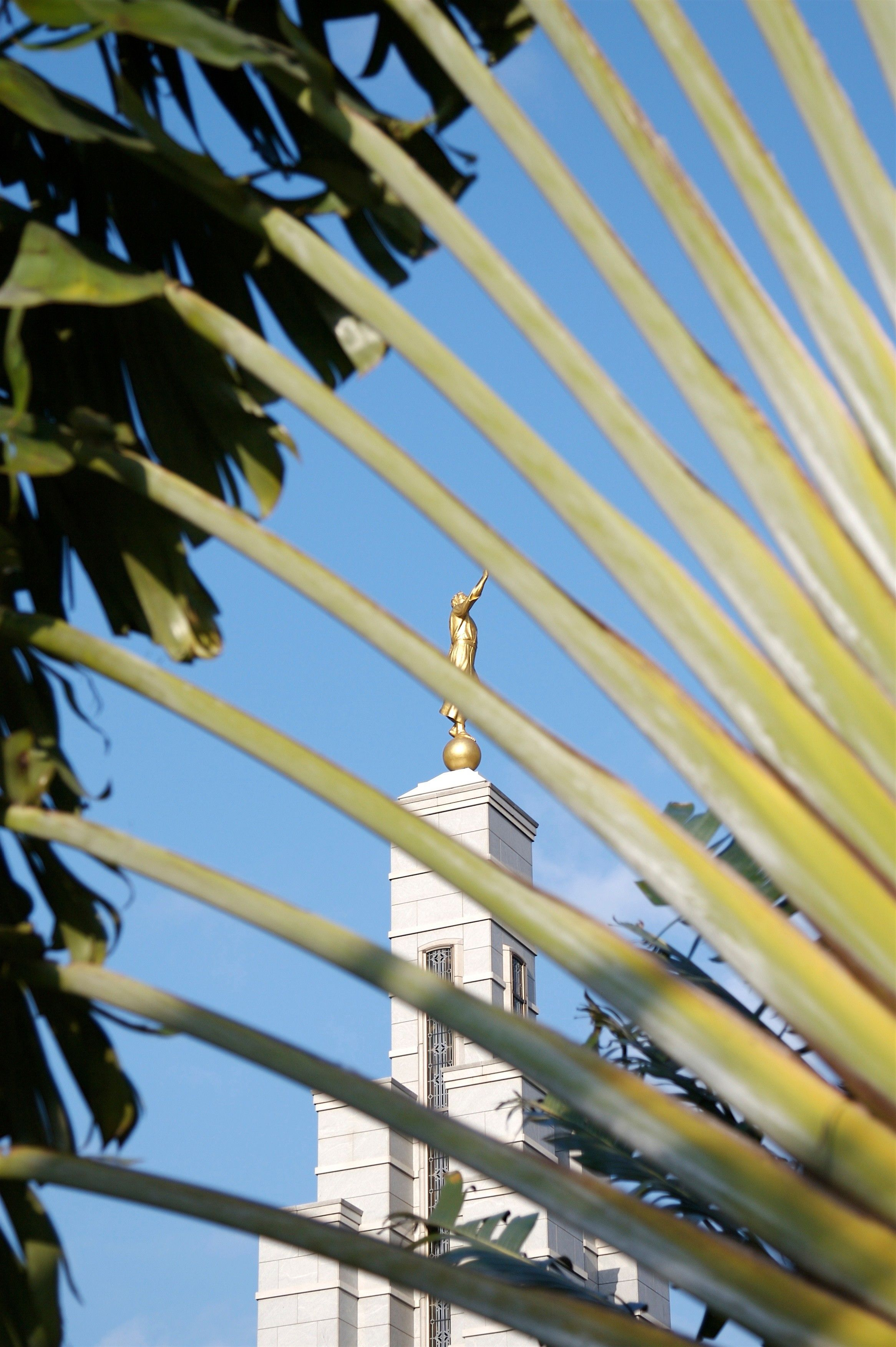 Peering through palm leaves at the Accra Ghana Temple.