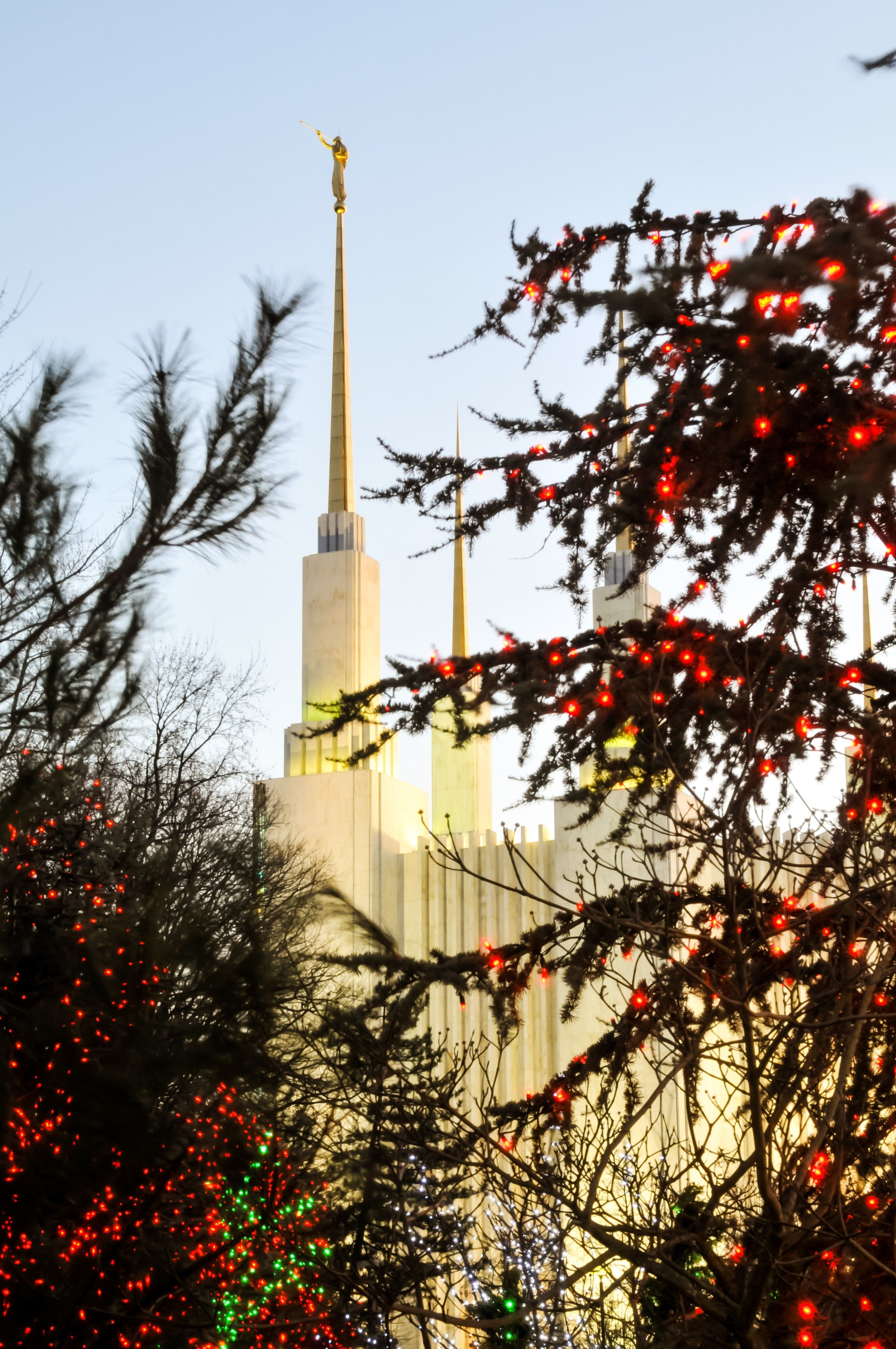 The Washington D.C. Temple spires during Christmas, with trees.