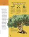 article on allegory of the olive tree