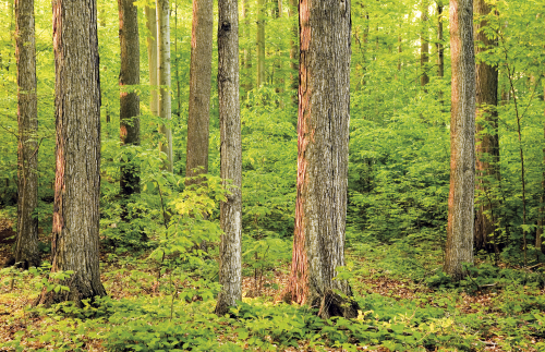 Lessons From the Sacred Grove