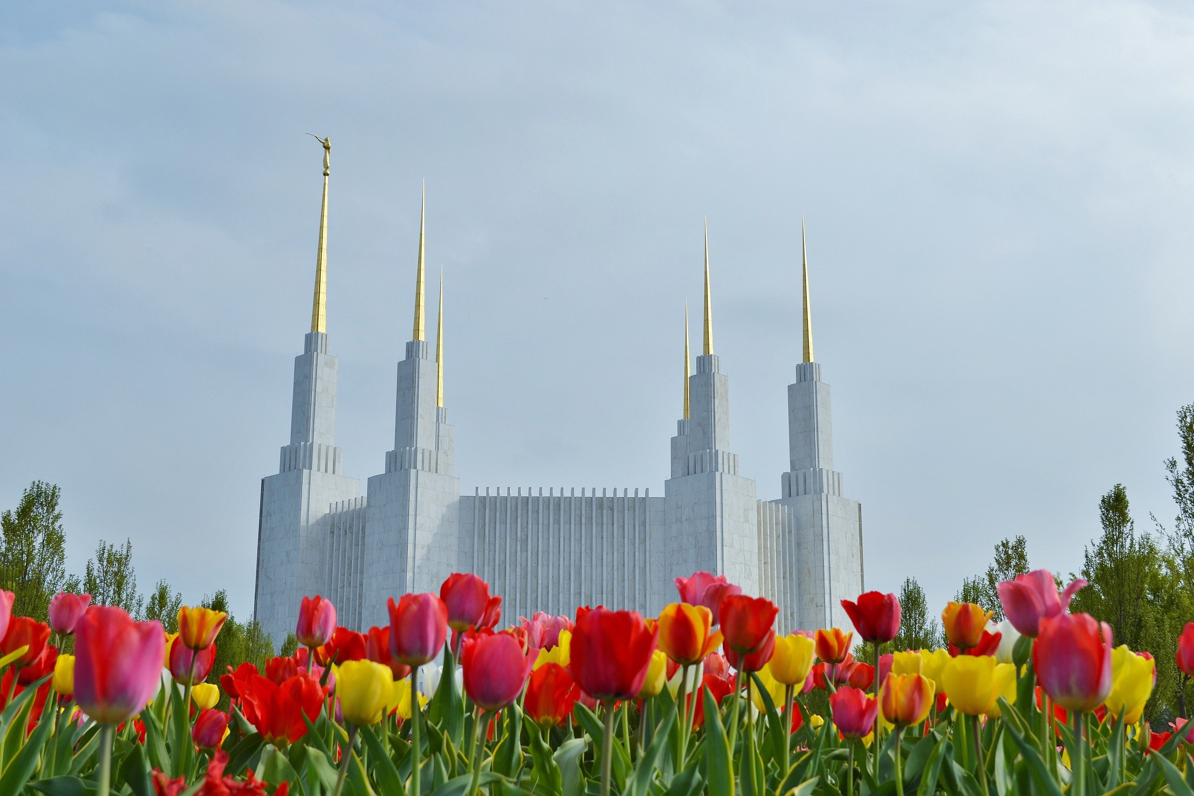 The Washington D.C. Temple during spring, with flowers.