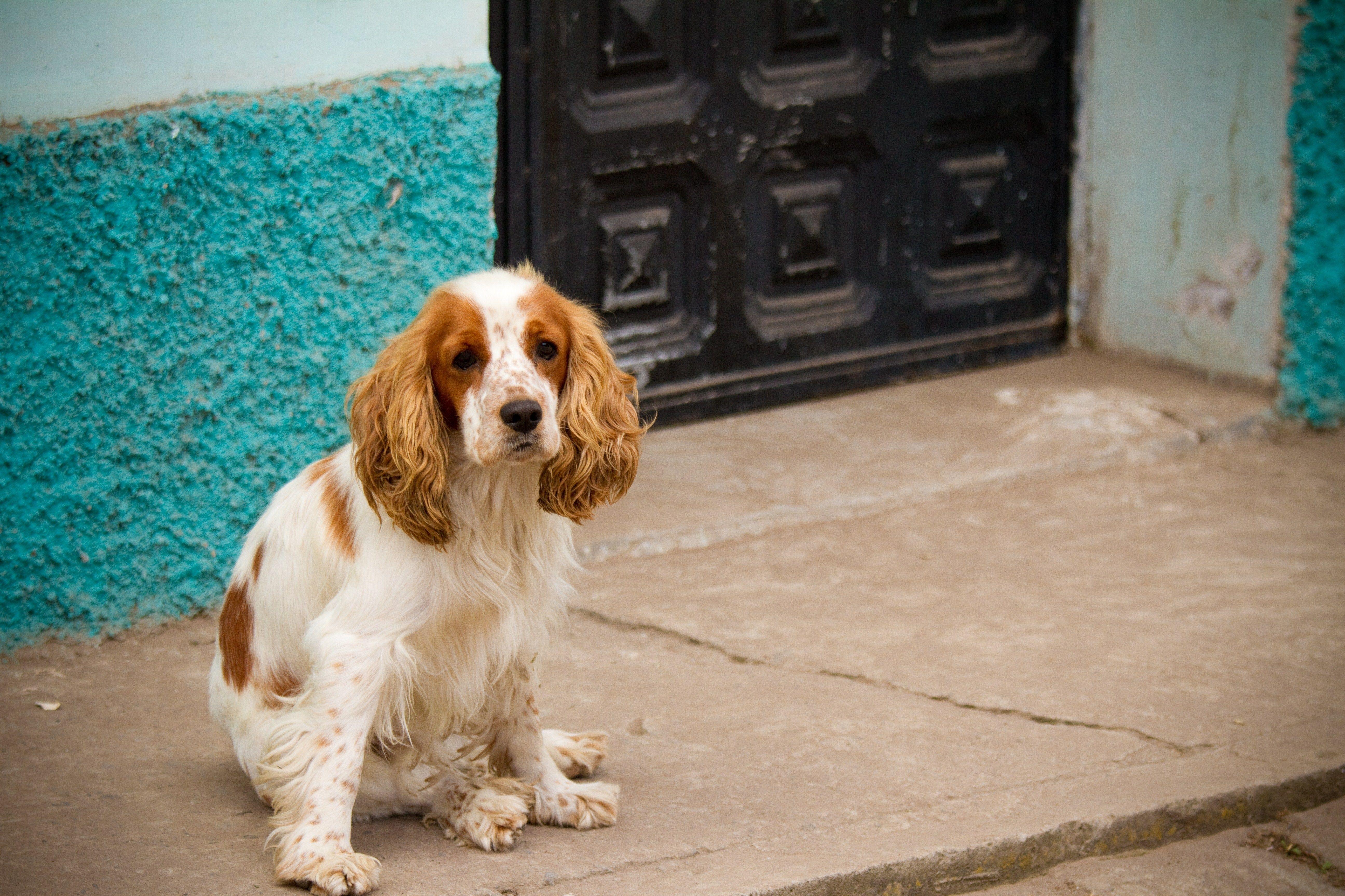 A dog sitting by a doorway on a street in Ecuador.