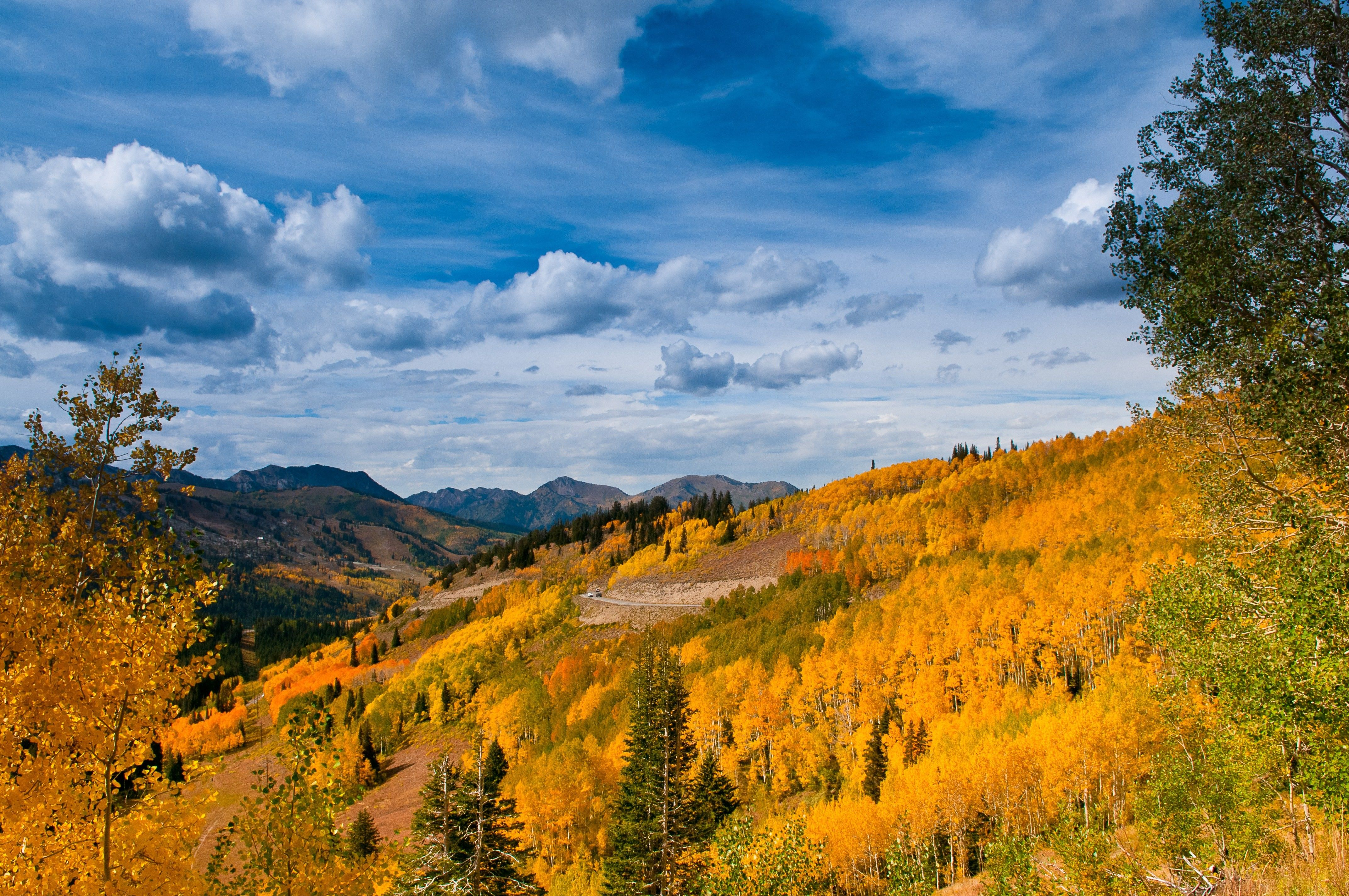Mountainside scenery of yellow trees, with a blue sky and clouds above.