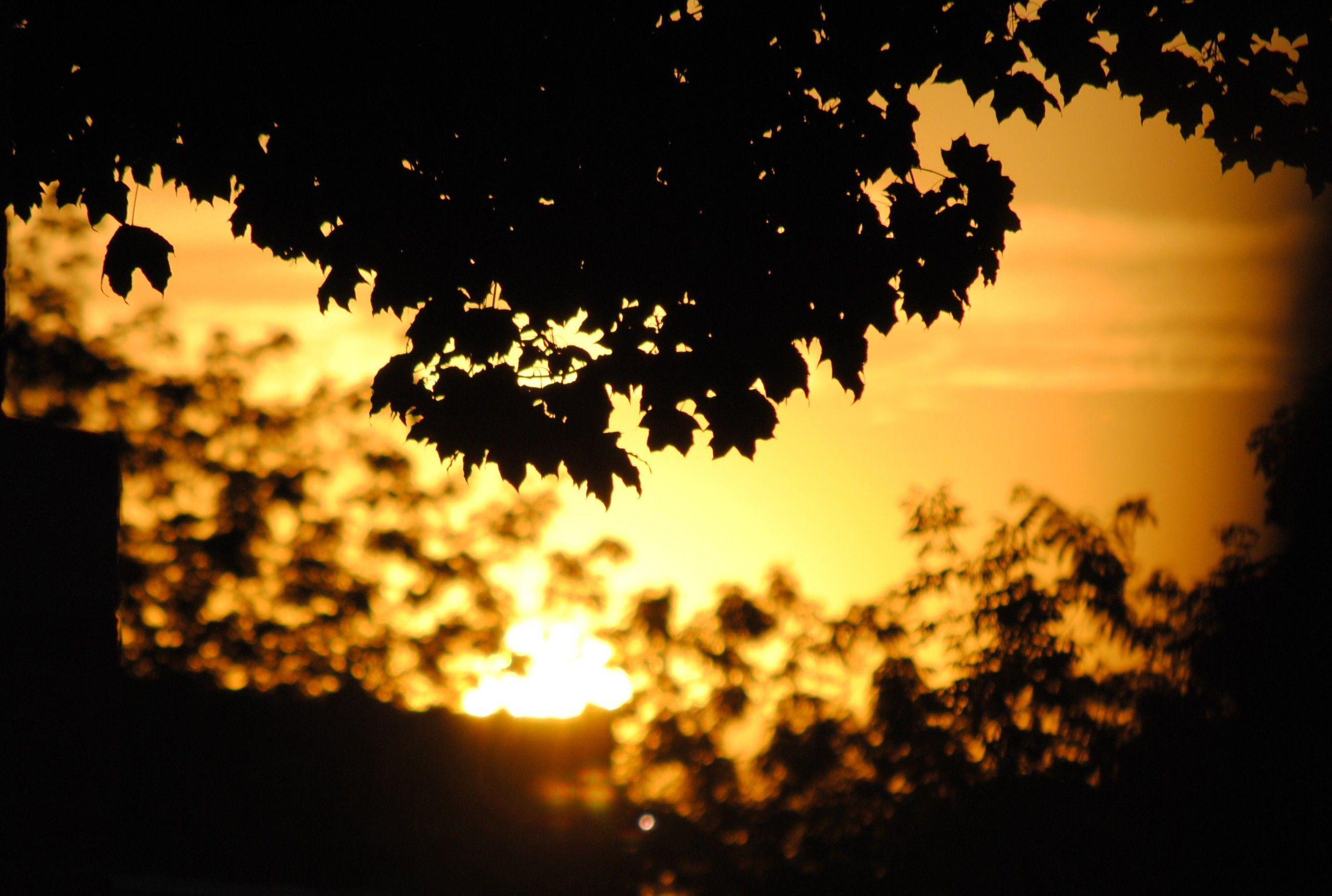 Silhouetted leaves during sunset.