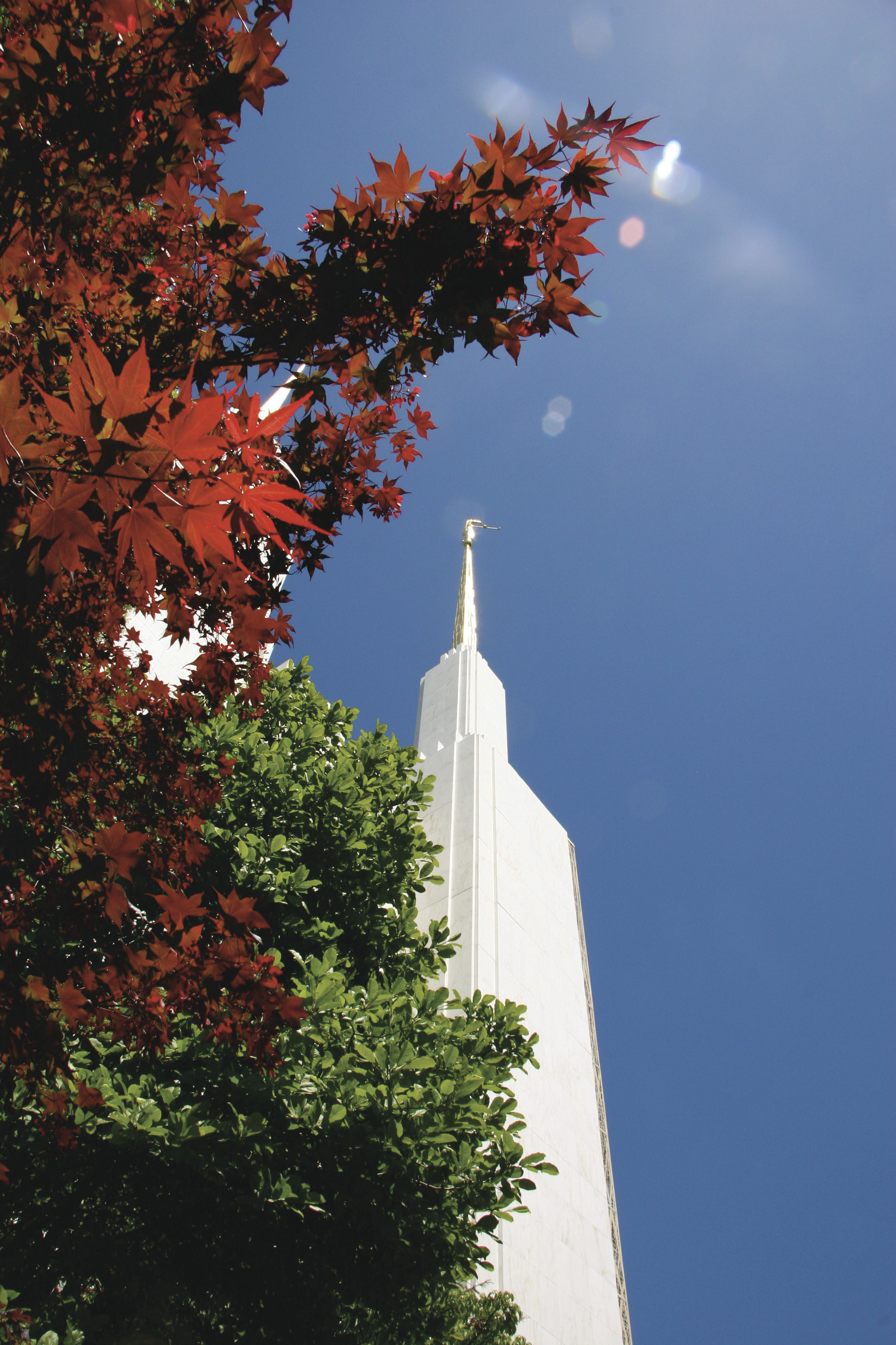 A spire of the Washington D.C. Temple, with scenery.