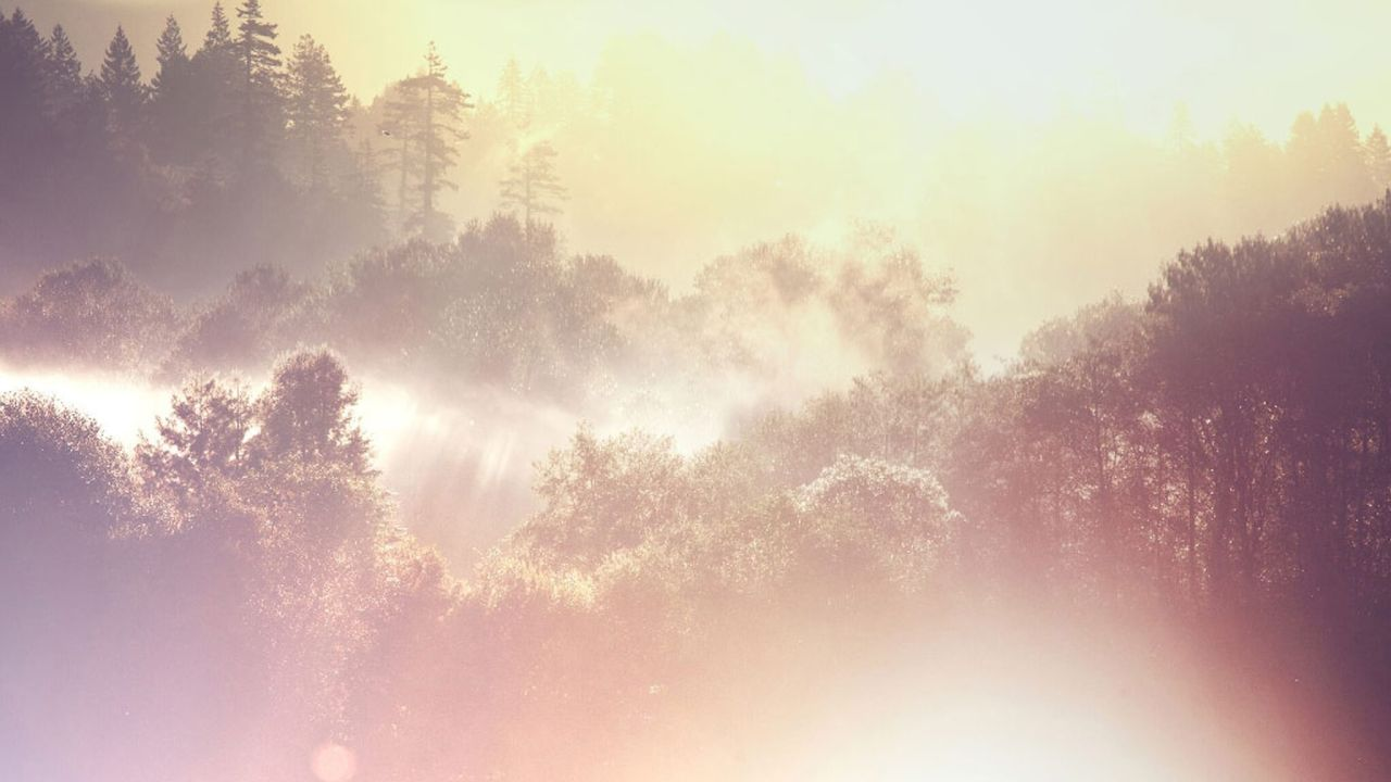 A misty forest with the sun shining on the tree tops shows the hand of God in nature