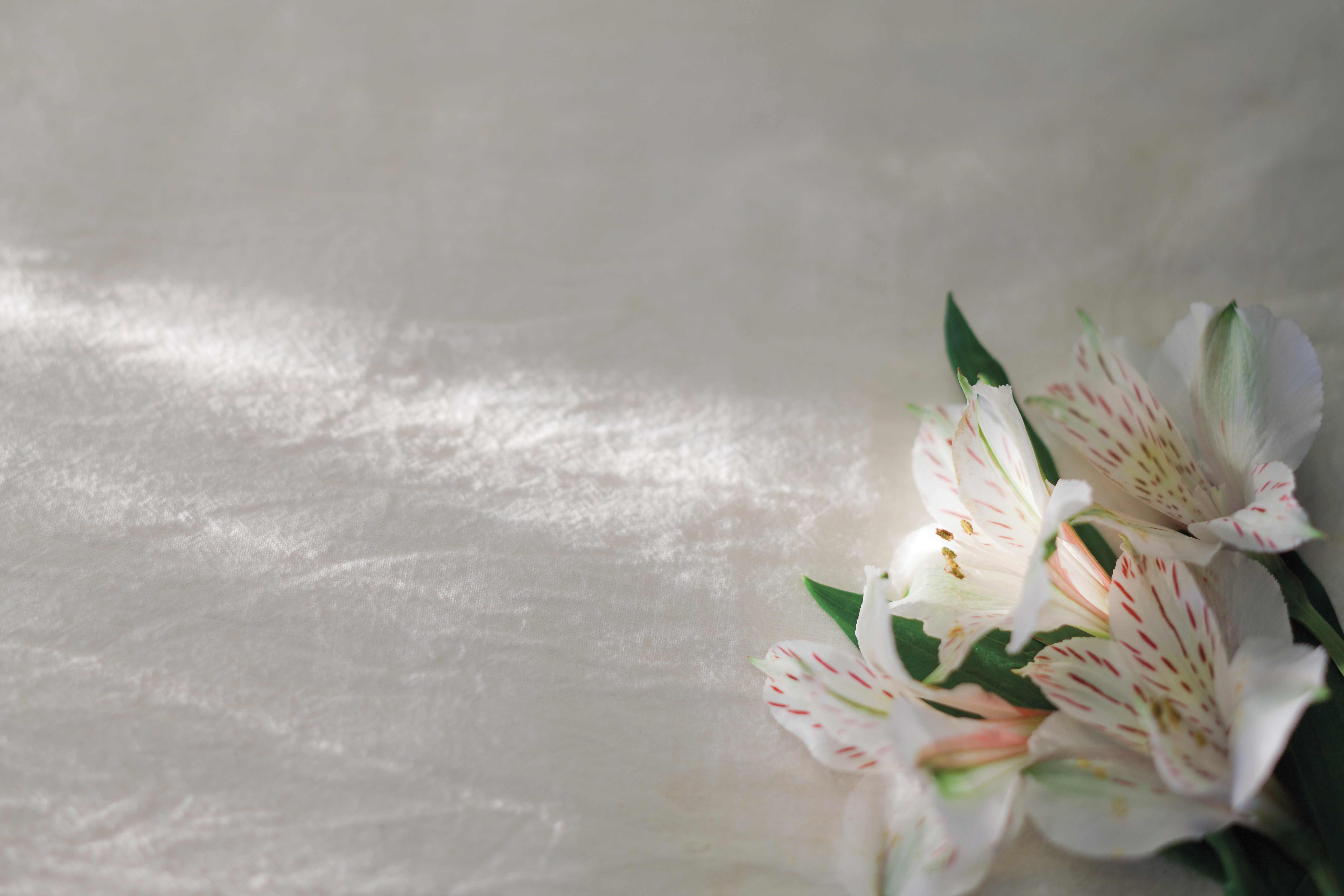 A bunch of white and pink lilies lying on a piece of linen.