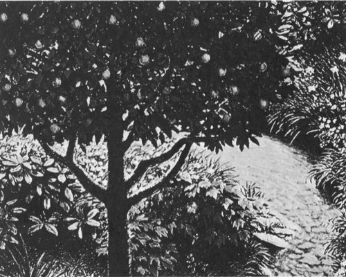 Creation of Plant Life