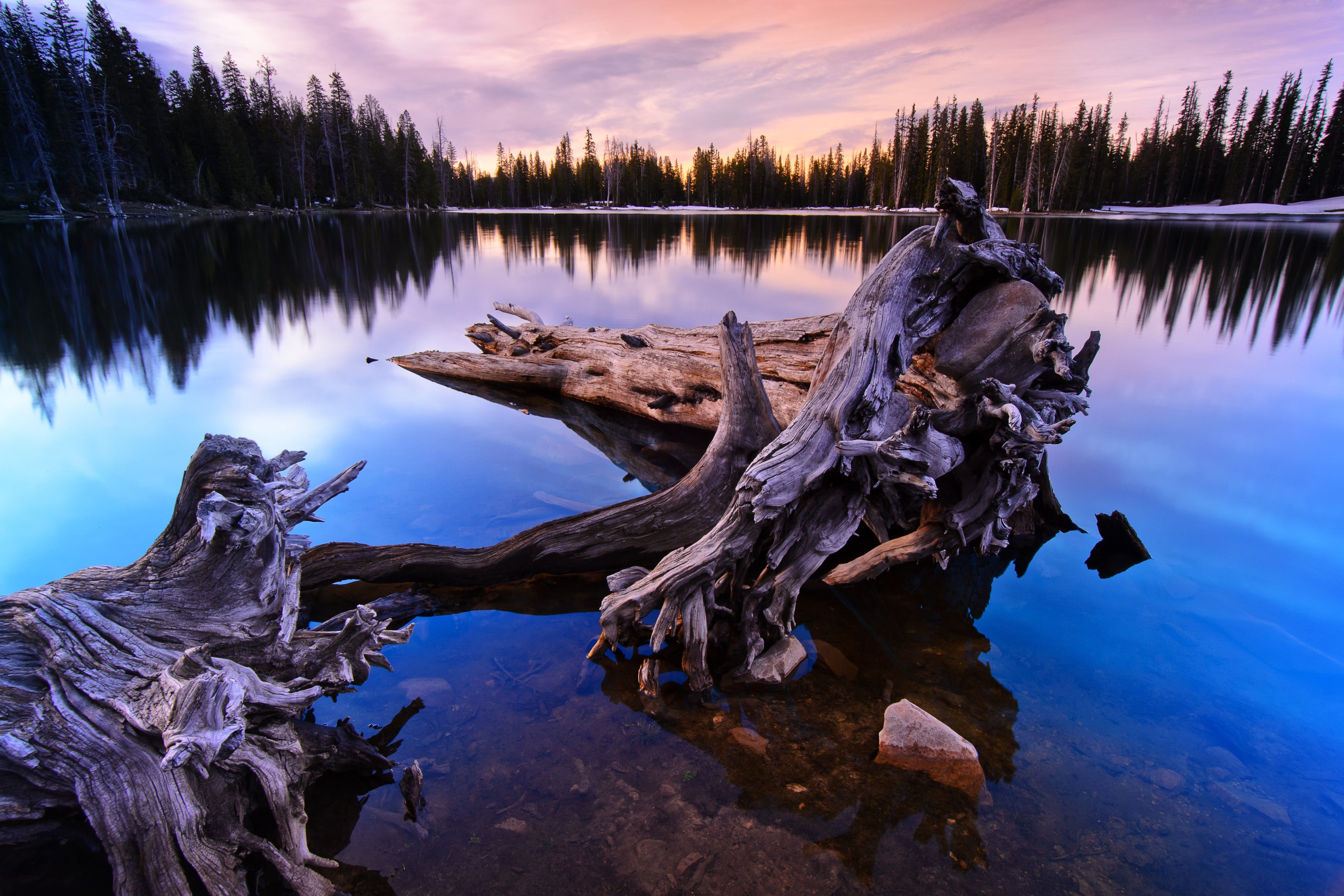 An image of large driftwood sitting in Crystal Lake.