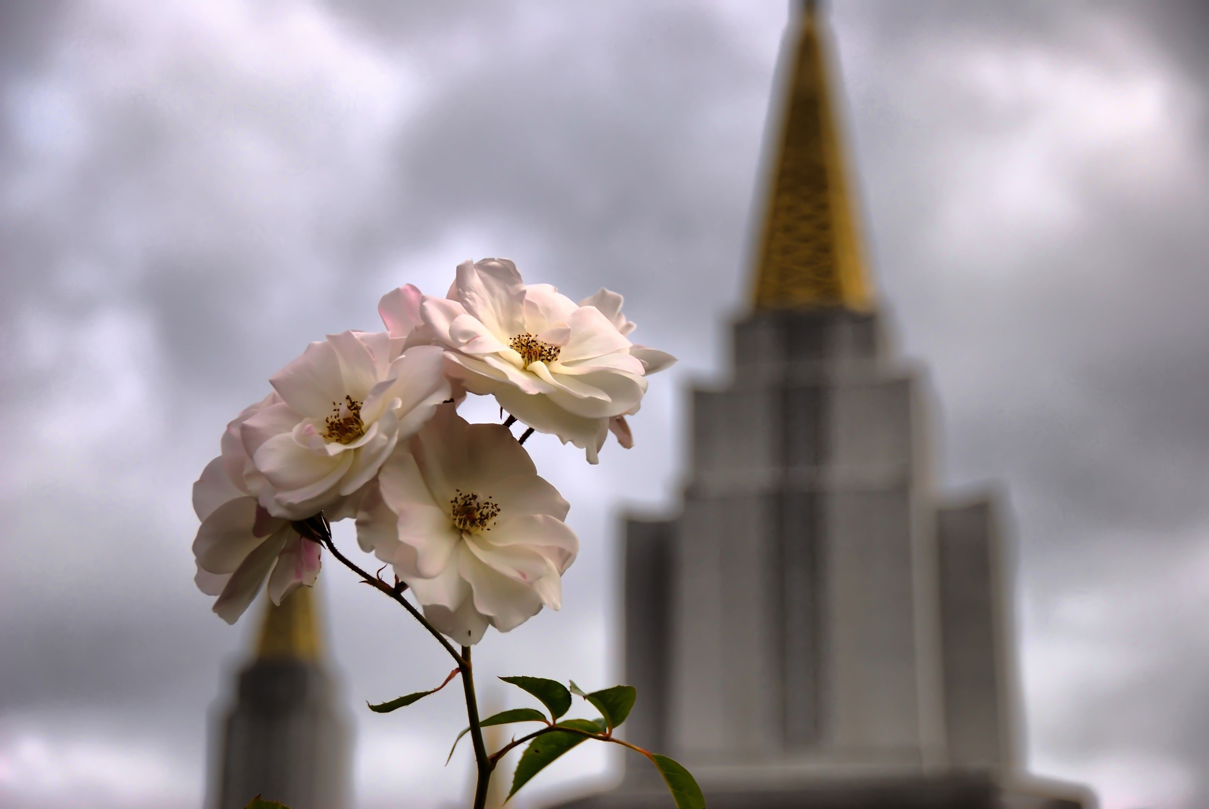 The Oakland California Temple spires, including flowers.